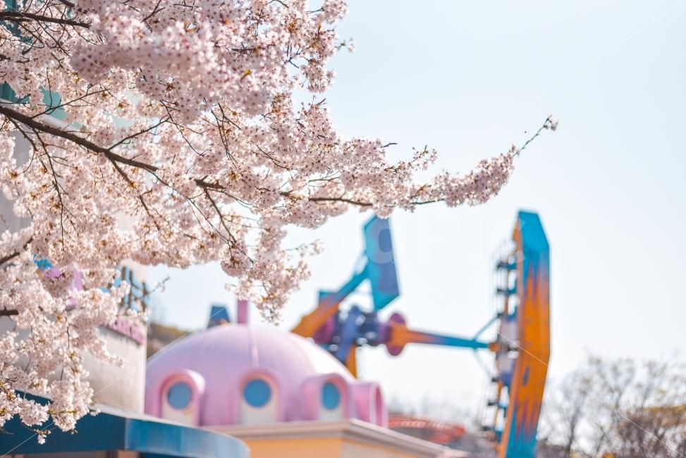 봄, 놀이동산, 축제, 벚꽃, 풍경