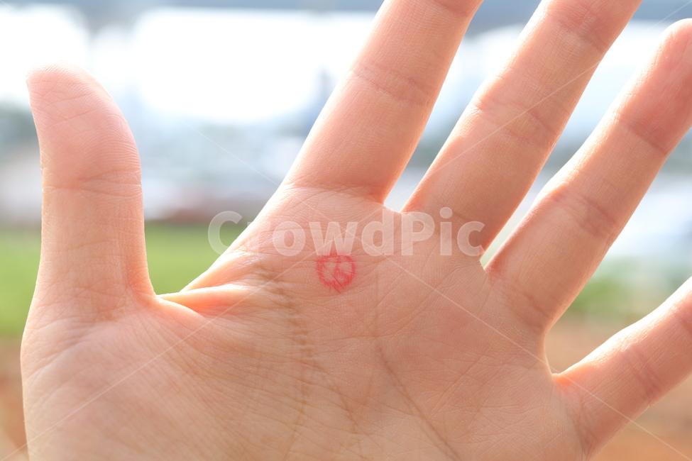 손, 손금, m자손금, 손바닥, 선거