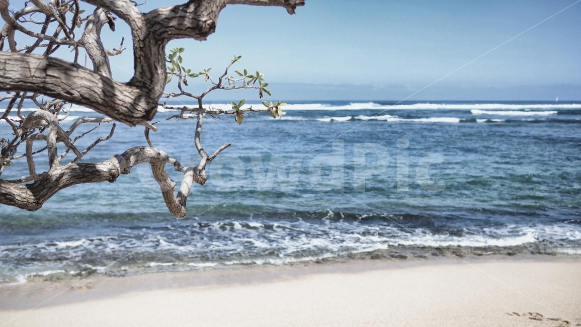 바다, 나무, 감성, 파랑, 하늘