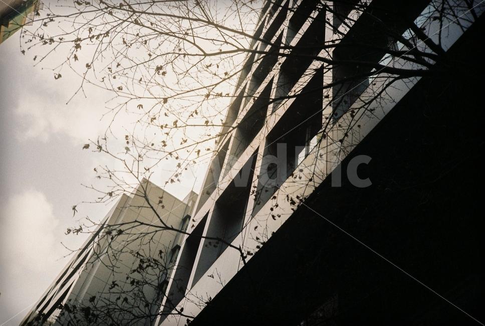 건물, 실루엣, 도시, 나무, 필름
