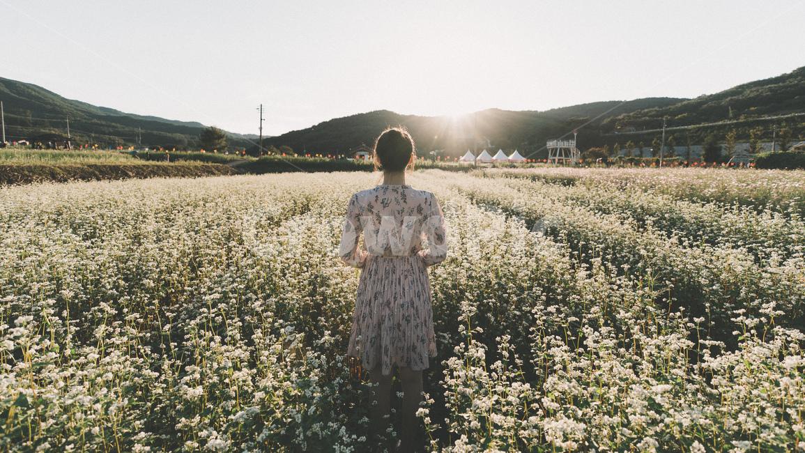 메밀꽃, 가을, 따뜻함, 일몰, 연분홍색