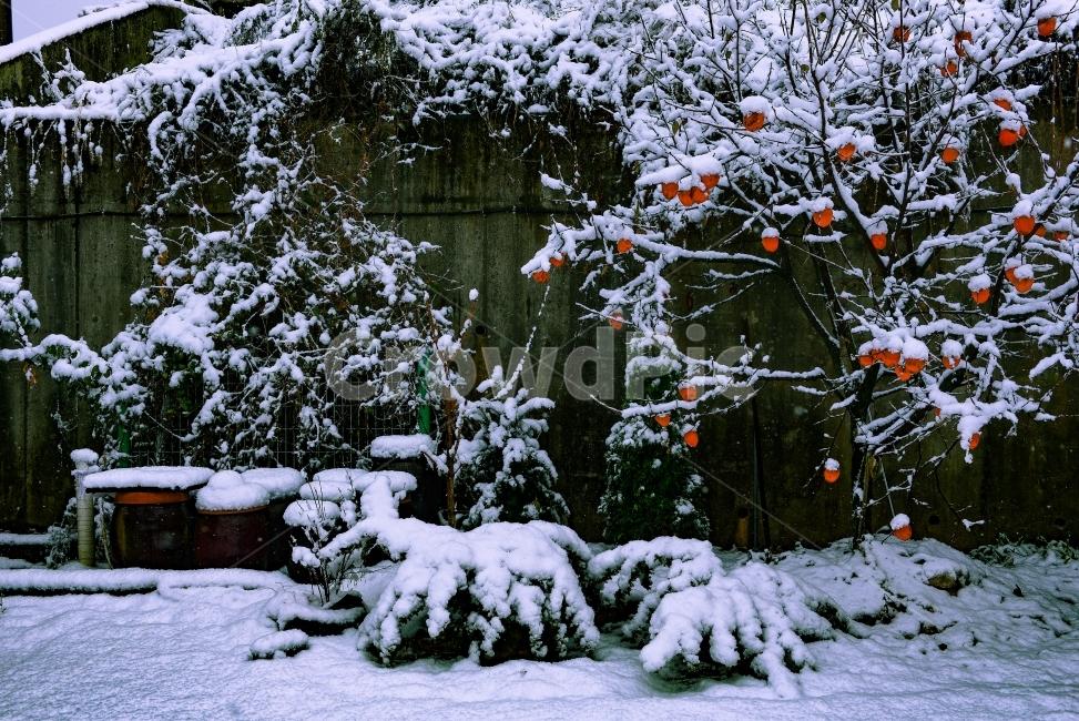 정원, 폭설, 풍경, 스냅, 눈