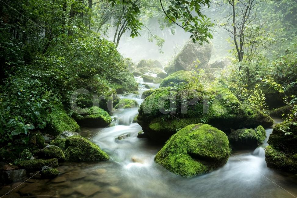 무건리이끼계곡, 강원도삼척, 여름끝자락, 비오는날, 폭포