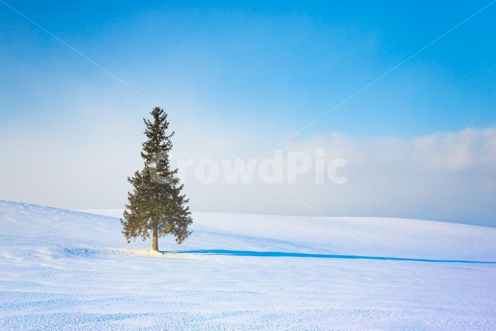크리스마스트리, 나무, 자연, 풍경, 겨울