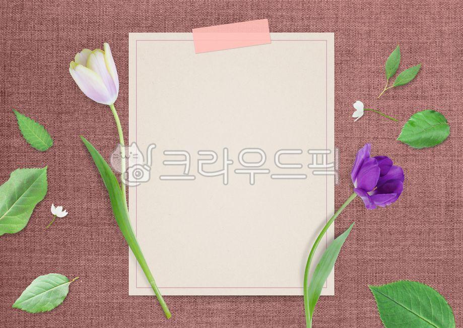 봄, 식물, 자연, 화사한, 백그라운드