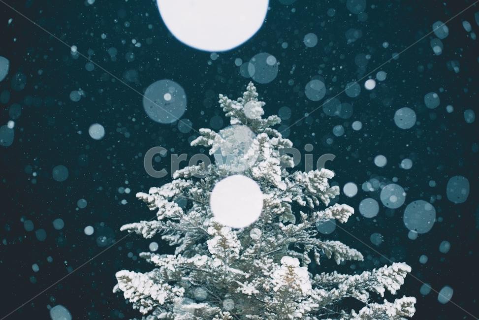 눈, 나무, 겨울, 보케, 트리