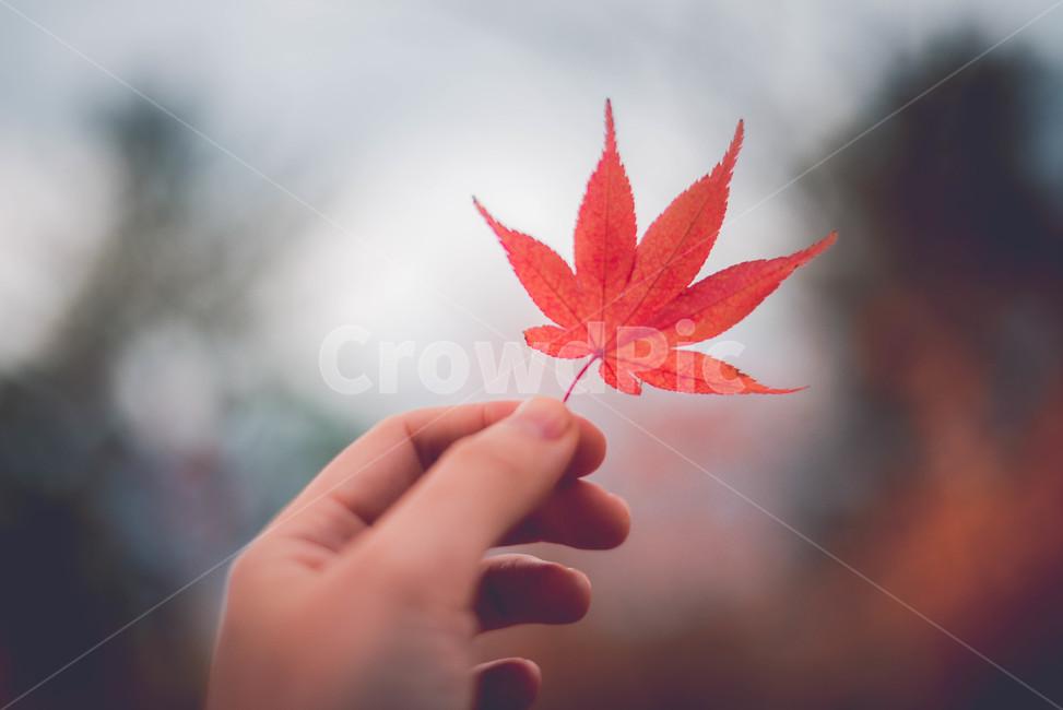 leaf, 잎, plant, 식물, tree