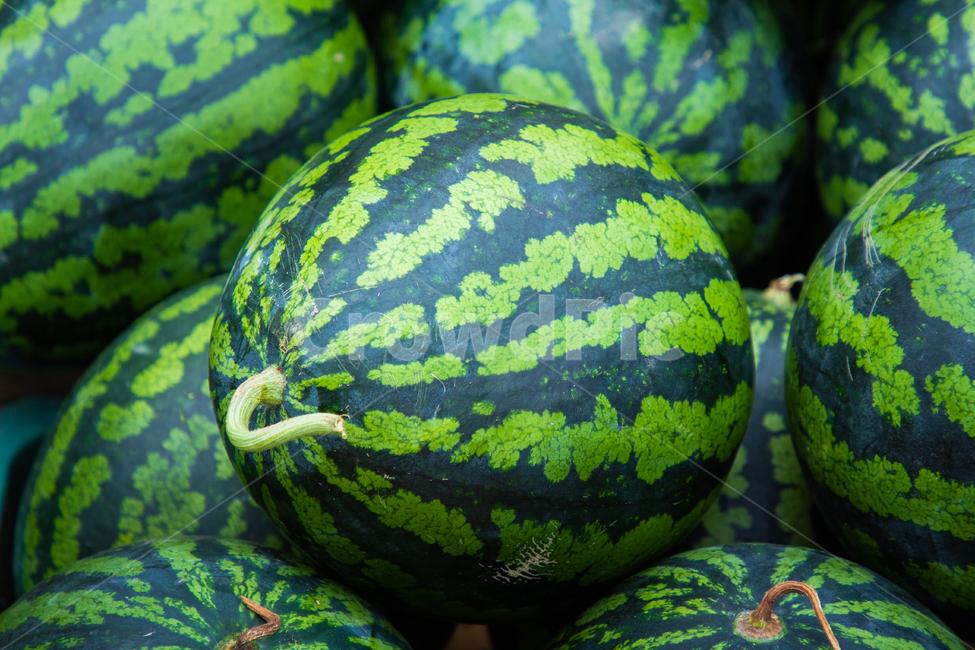 plant, 식물, 수박, watermelon, 과일