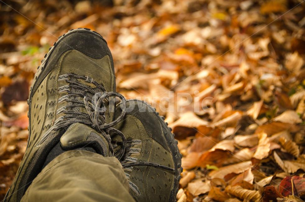 가을, 등산화, 낙엽, 단풍, 발