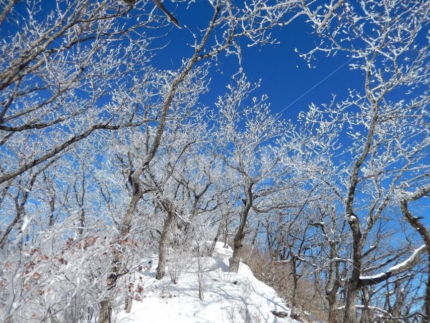 민주지산, 눈꽃풍경, 상고대, 겨울풍경, 겨울동화 사진, 이미지
