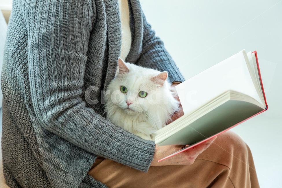 고양이, 반려묘, 반려동물, 동물, 여성