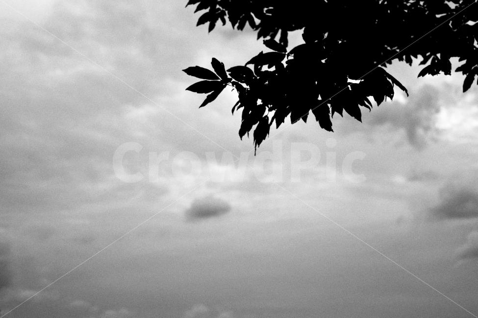 하늘, 나무, 구름, 흑백, 자연