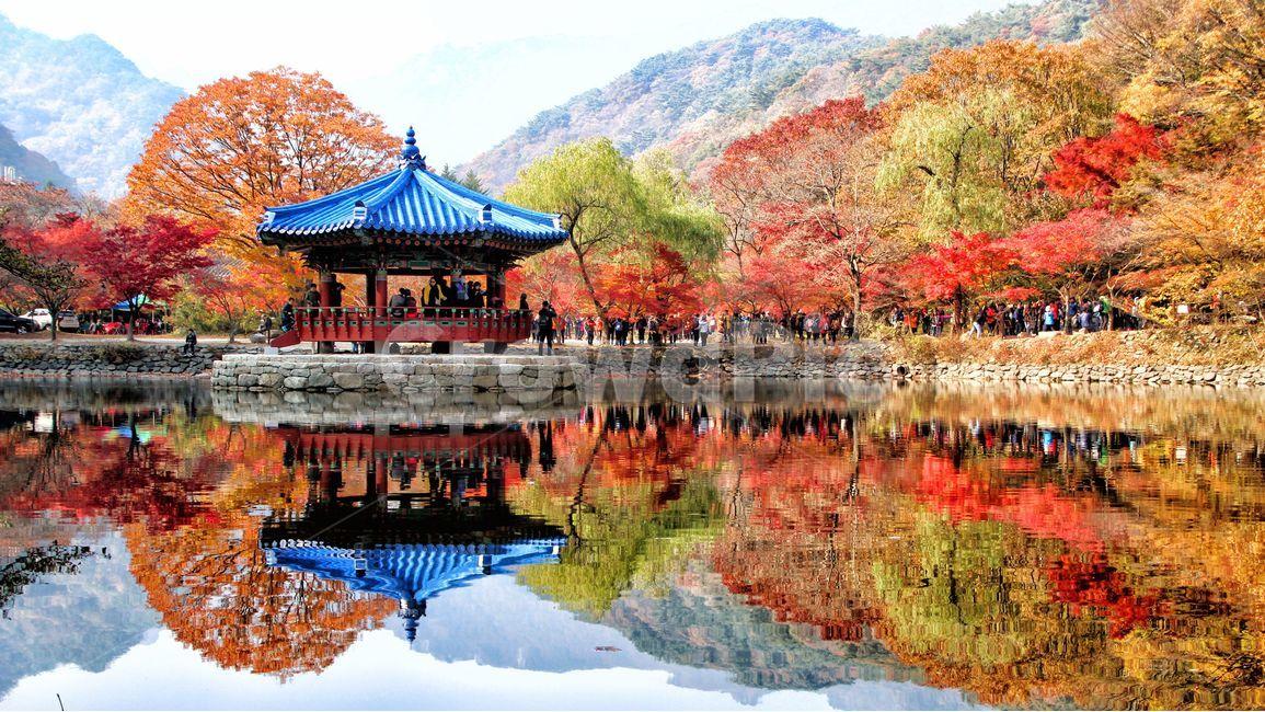 풍경, 배경, 가을, 단풍, 등산