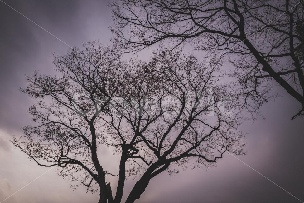 나무, 양화진, 겨울나무, 나무사진, tree