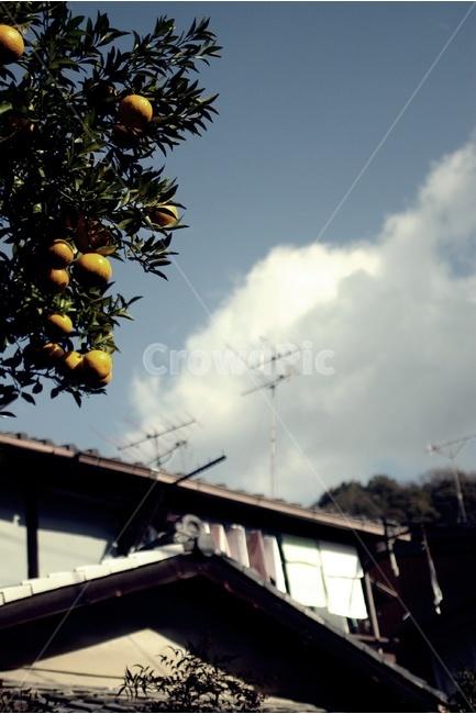 나무, 열매, tree, fruit, 하늘