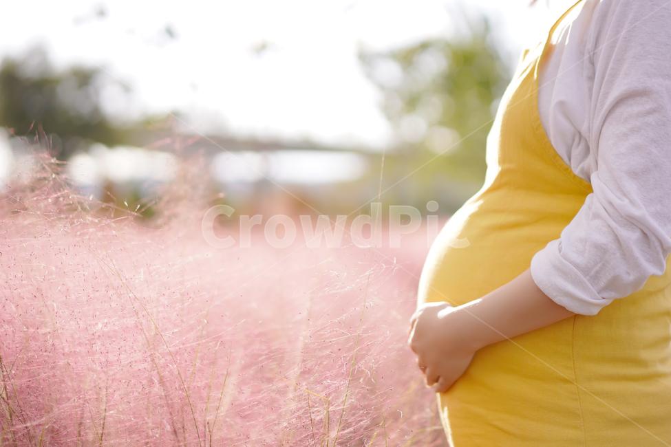 만삭, 감성, 핑크뮬리, 가을, 임산부