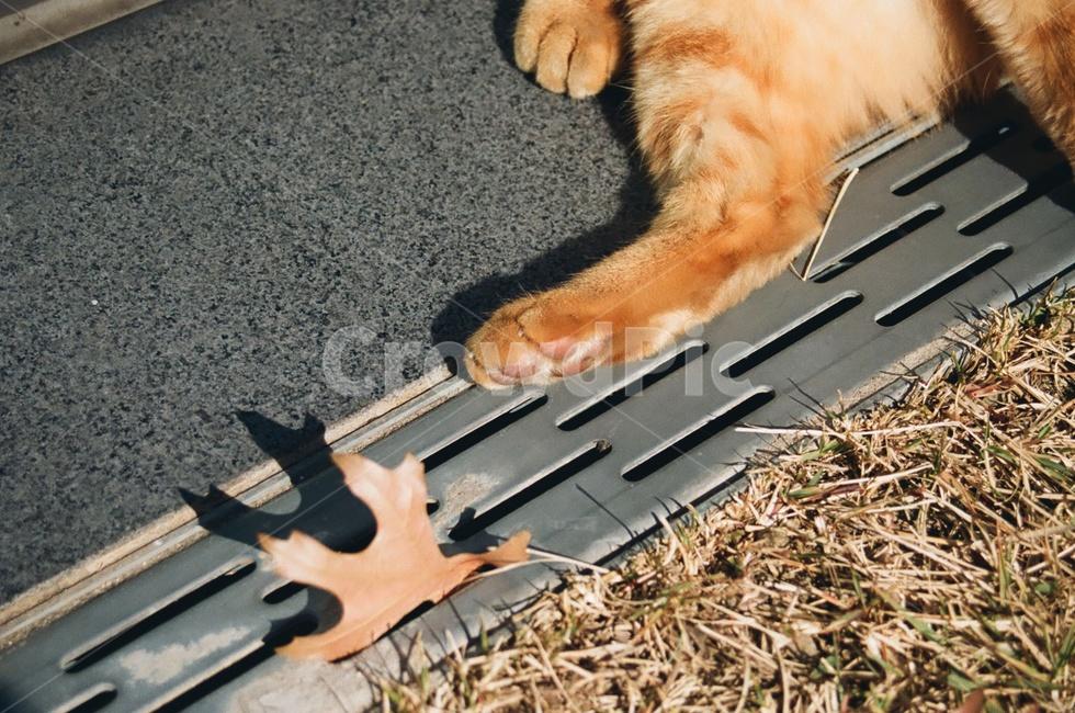 고양이, 포유류, 동물, 발바닥, animal