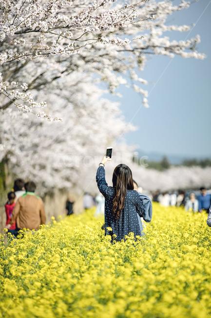 제주, 봄, 유채꽃, 하늘, 도로