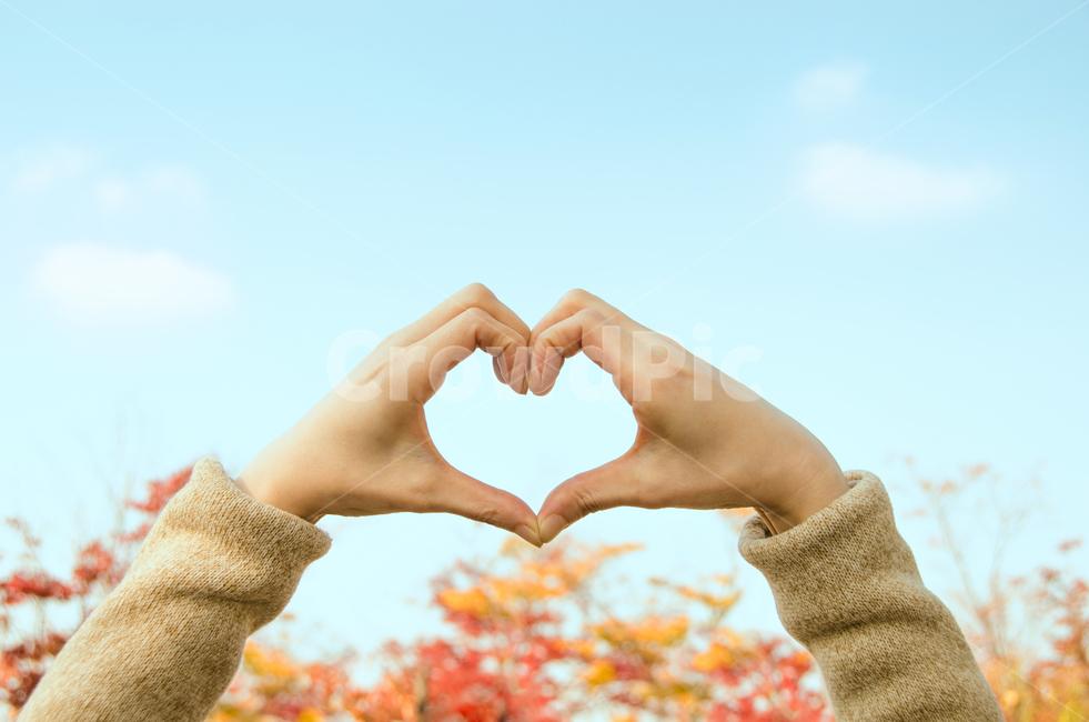 손, 하트, 단풍, 자연, 가을