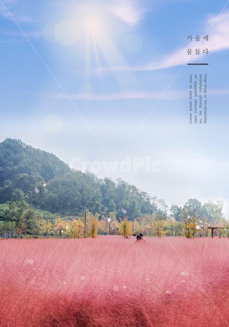 가을, 편집, 감성, 핑크뮬리, 하늘