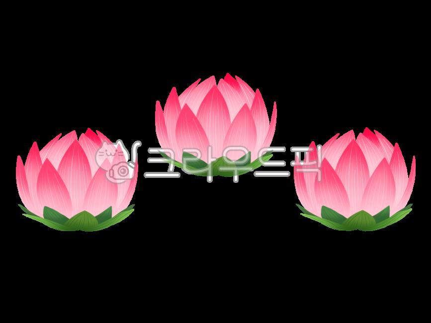 연꽃, 연, 연등, 부처님오신날, 석가탄신일