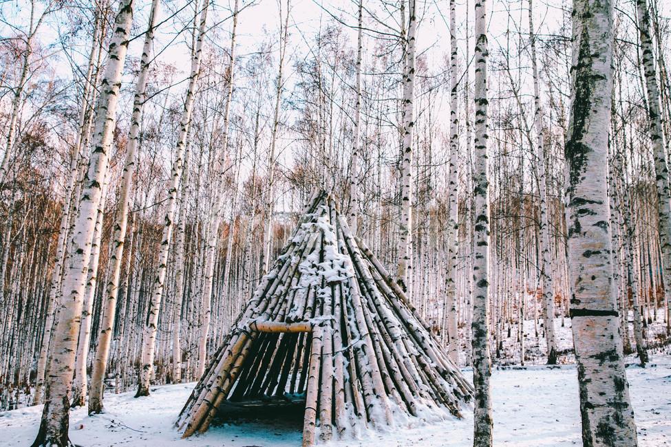설경, 눈풍경, 자작나무숲, 인제, 자작나무