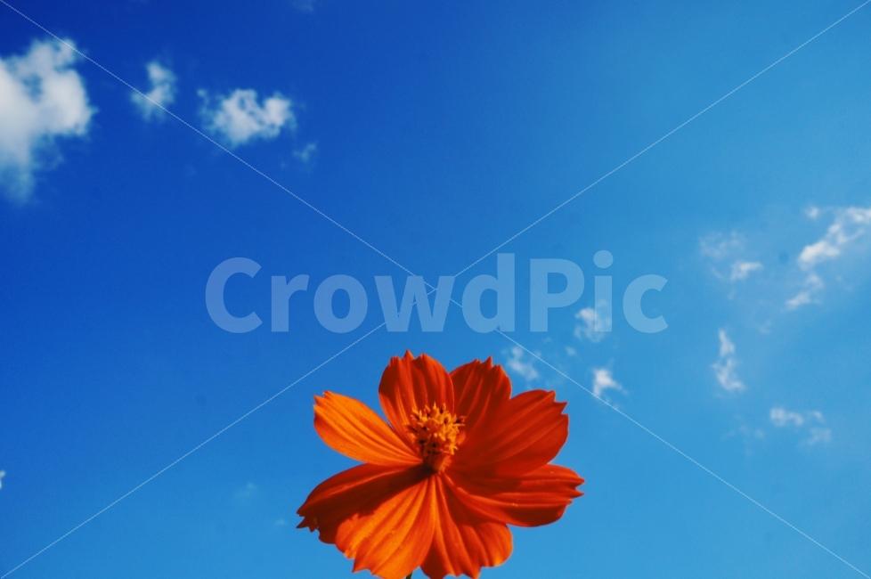 꽃, 날씨, 화창, 꿈, 행복