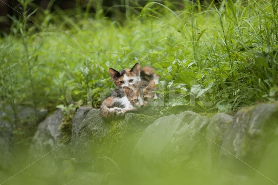 동물, 자연, 고양이, 포유류, 일상사진