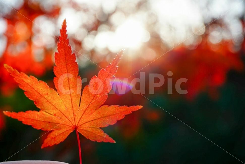 단풍, 가을, 논산, 시민공원a600, a6000