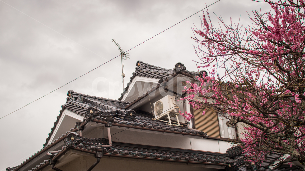 매화, 일본, 건물, 전통, 꽃