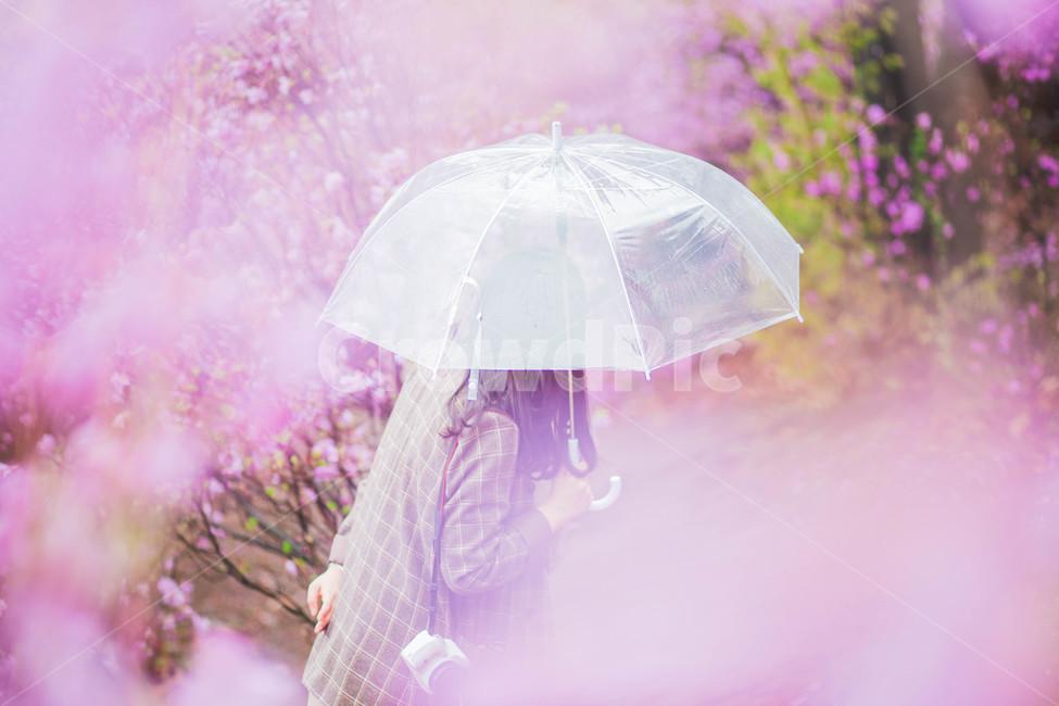 기다림, 설레임, 진달래, 우산, 비오는날