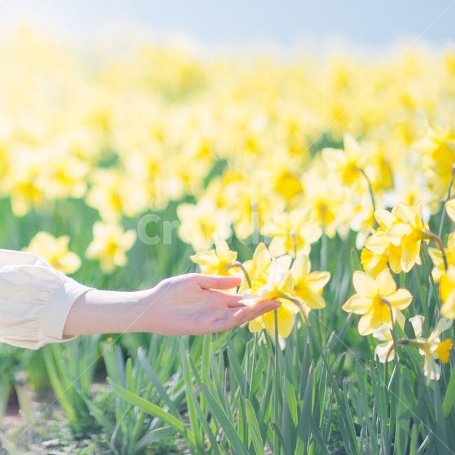 부산, 오륙도, 감성사진, 수선화, 꽃