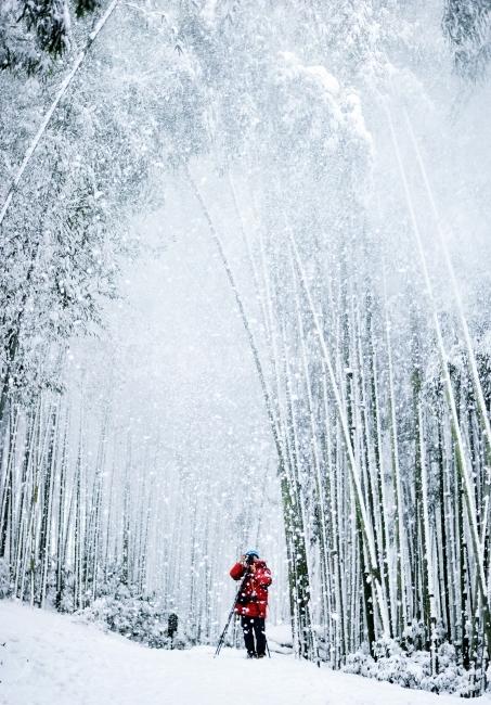 담양, 죽녹원, 겨울, 눈, 출사