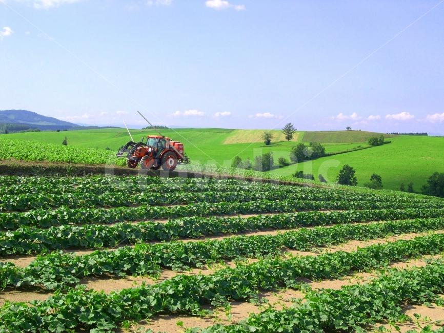 트랙터, 농기계, 농업, 농사, 밭