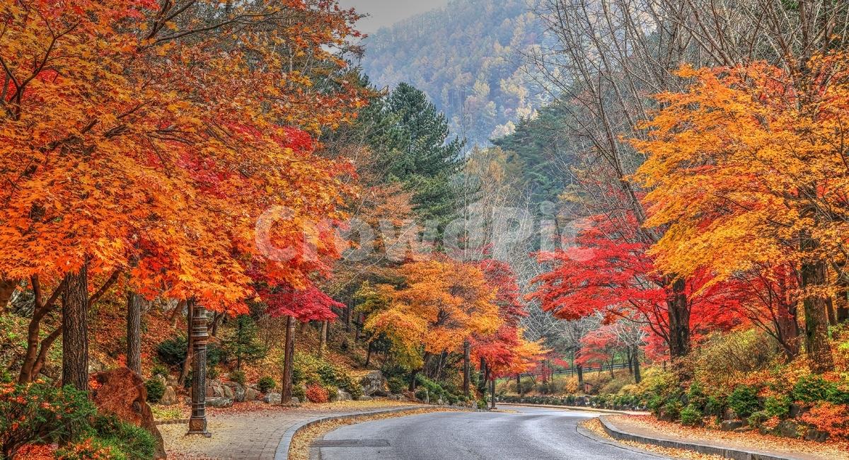가을, 구인사, 단풍, 절, 단풍길