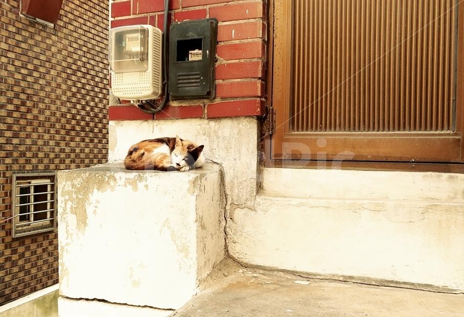 고양이, 길거리, 골목, 길냥이, 동물