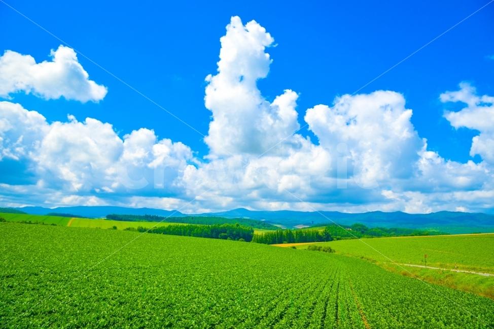 일본, 홋카이도, 비에이, 파노라마로드, 푸른하늘