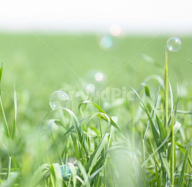비눗방울, 감성, 초록, 투명, 감성사진