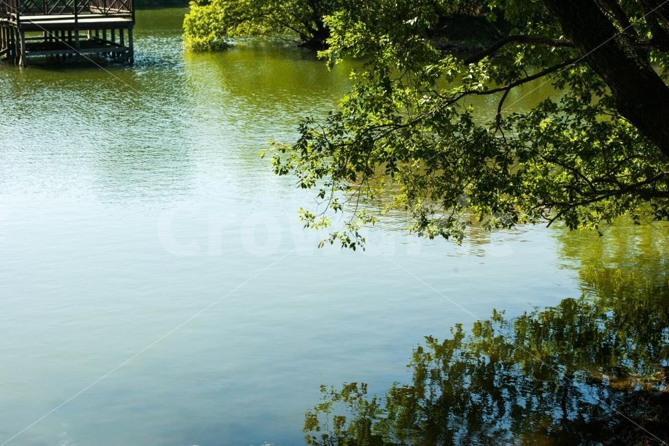 자연, 풍경, 여름, 초록, 반영