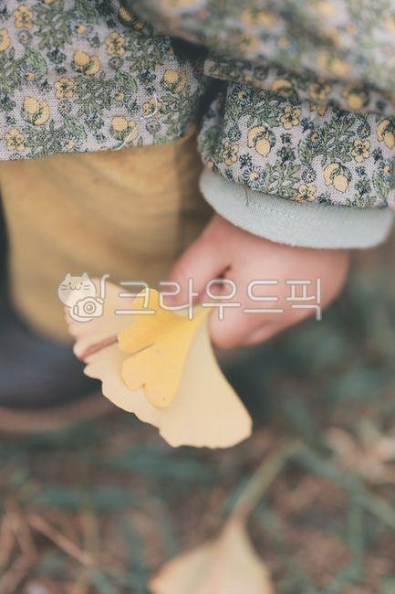 아기손, 손, 가을, 단풍, 은행잎