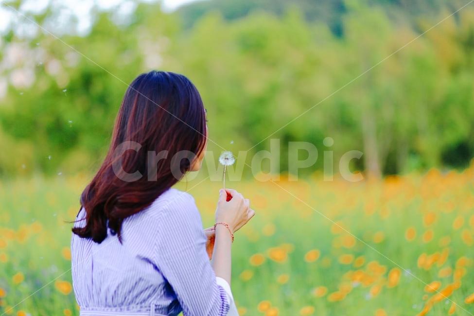 금계국, 태화강대공원, 민들레, 홀씨, 감성