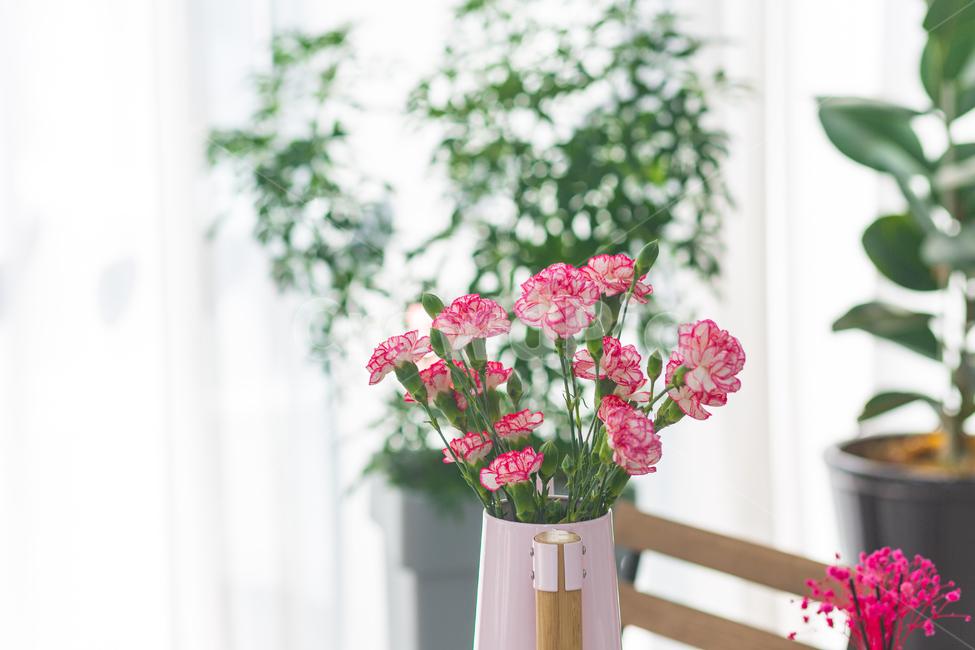카네이션, 꽃, 어버이날, 봄, 화사한