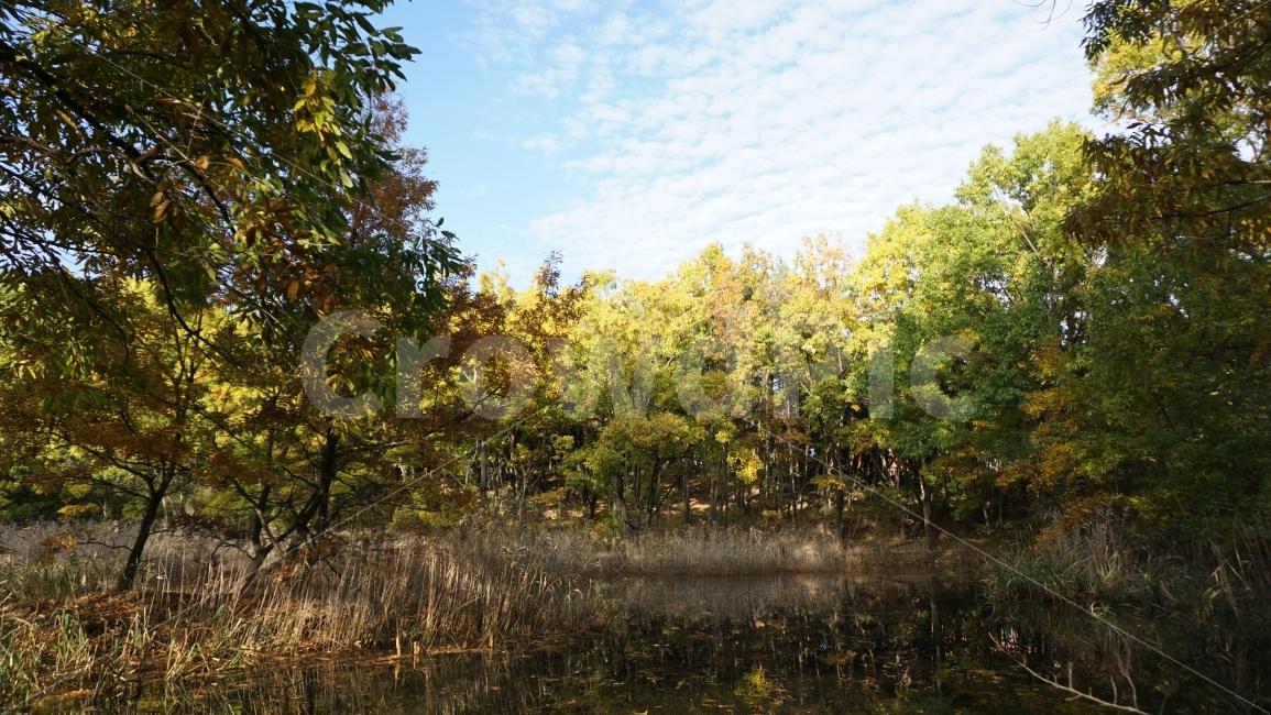 가을, 숲, 자연, 단풍, 하늘