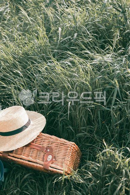모자, 숲, 가방, 소풍, 피크닉