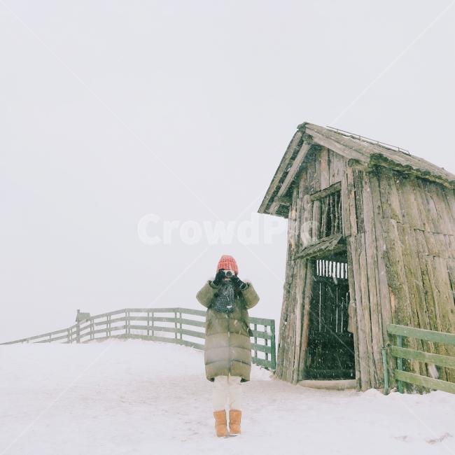 겨울, 눈, 대관령, 양떼목장, 감성사진