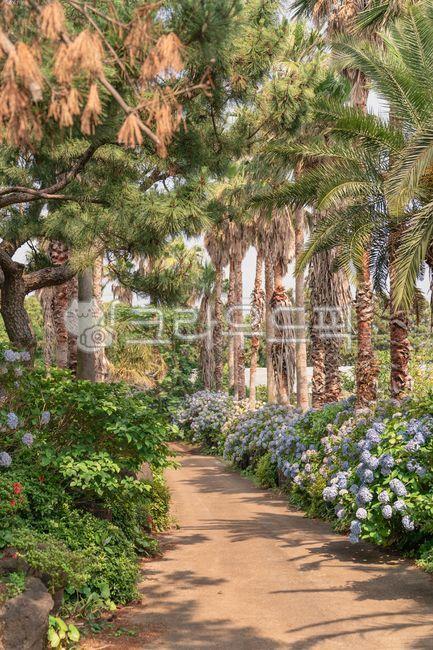 garden, 정원, outdoors, 옥외, plant