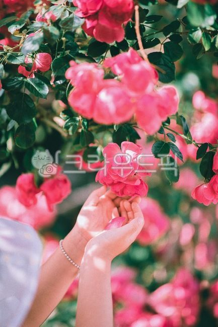 flower, blossom, 꽃, plant, 식물