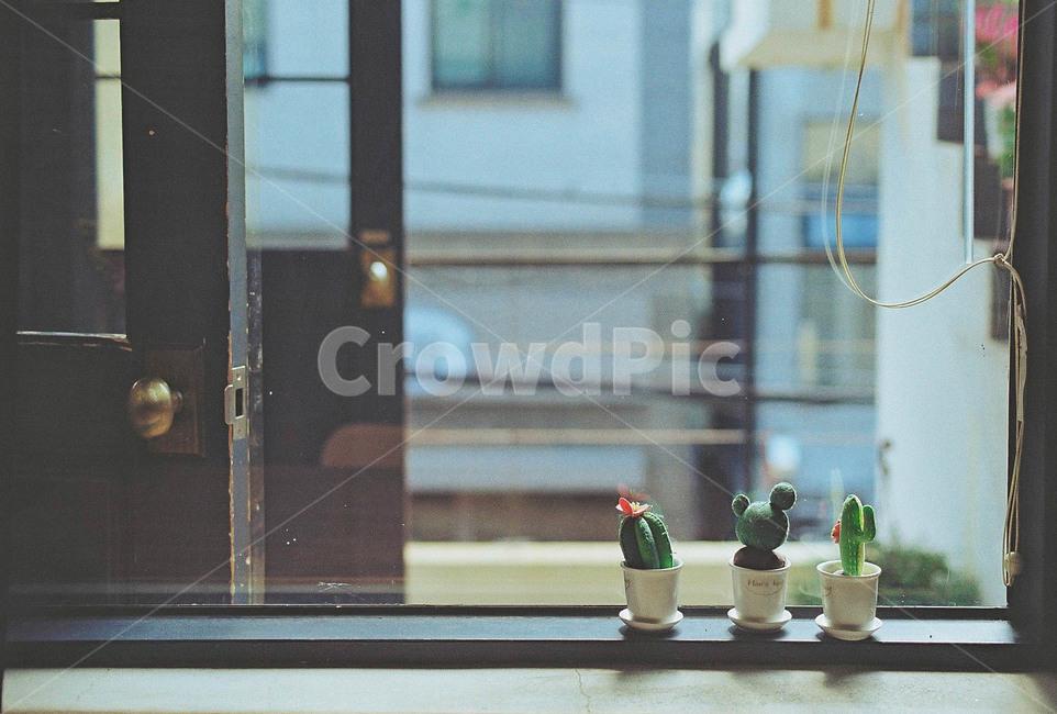 선인장, 창문, 필름사진, 문, 카페