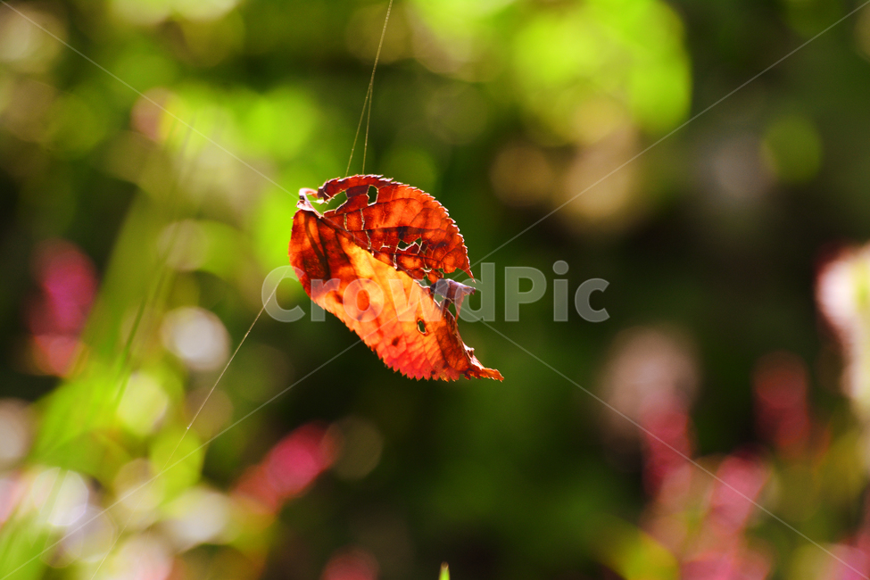 가을, 낙엽, 보케, 거미줄, 가을서정