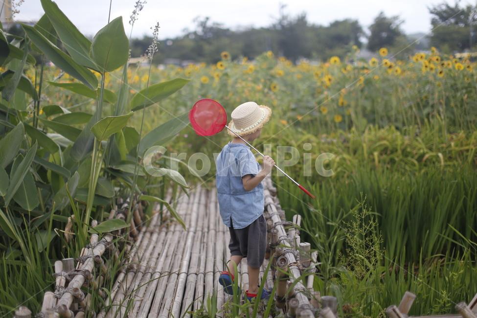 곤충채집, 방학, 여름방학, 산책, 해바라기
